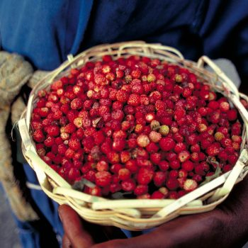 Red berries in basket, Haiti